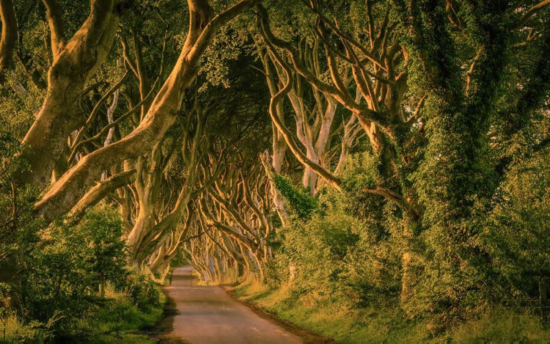 The Dark Hedges Stranocum