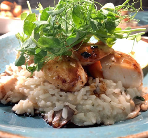 Tasty scallops served with mushroom risotto from Cuchullin Restaurant