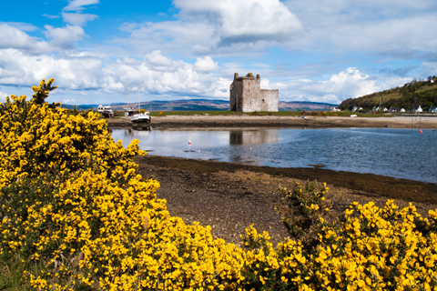 Lochranza Castle sitting overlooking a loch seen through a yellow gorse bush