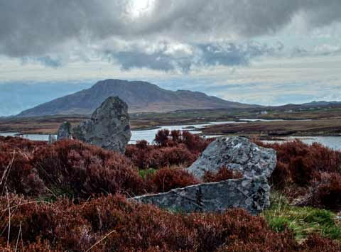 Heather surrounds the ancient stones of Pobull Fhinn on North Uist