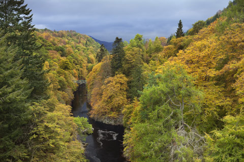 river in Highland Perthshire with lush forest on either side